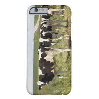 Young Dairy Cattle In Pasture Barely There iPhone 6 Case