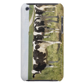 Young Dairy Cattle In Pasture Case-Mate iPod Touch Case