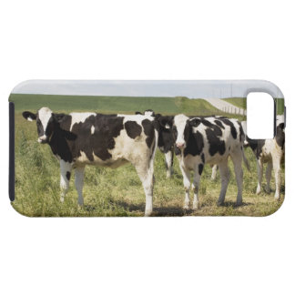 Young Dairy Cattle In Pasture iPhone SE/5/5s Case