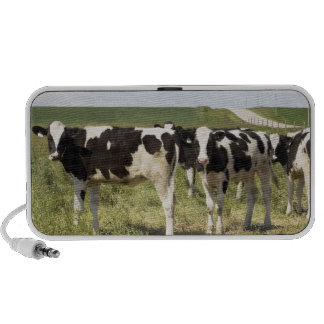 Young Dairy Cattle In Pasture Mp3 Speakers