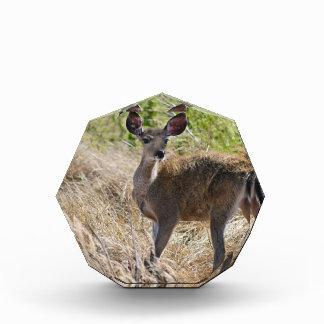 Young Deer Acrylic Award
