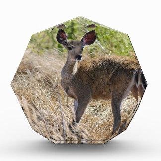 Young Deer Award