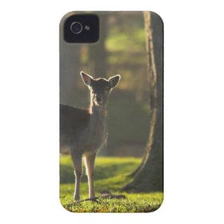 Young Deer Blackberry Bold Case