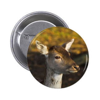 Young Deer Button Badge