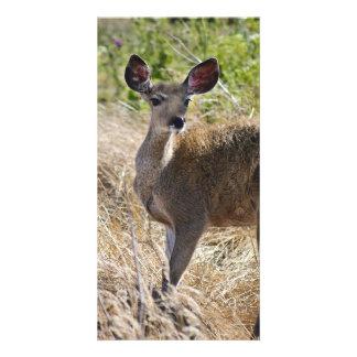 Young Deer Card