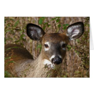 Young Deer Fathers Day Card