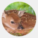 Young_Deer_Fawn-1 Pegatina Redonda