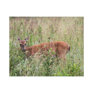 Young Deer in field, Smoky Mountains Canvas Print