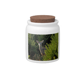 Young Deer in Pine Trees Candy Jar
