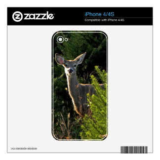 Young Deer in Pine Trees Phone Skin Skin For iPhone 4
