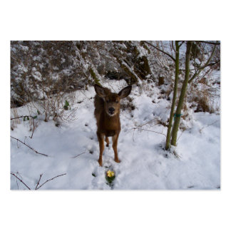 Young Deer In Winter Large Business Cards (Pack Of 100)