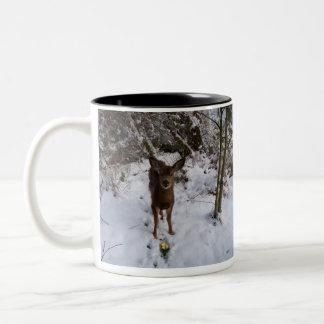 Young Deer In Winter Coffee Mugs
