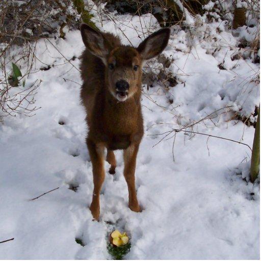 Young Deer In Winter Standing Photo Sculpture