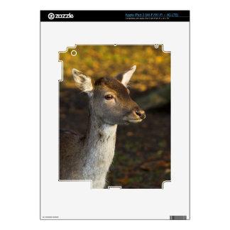 Young Deer iPad 3 Skin
