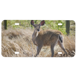 Young Deer License Plate