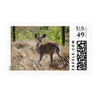 Young Deer Postage