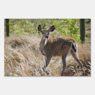 Young Deer Sign