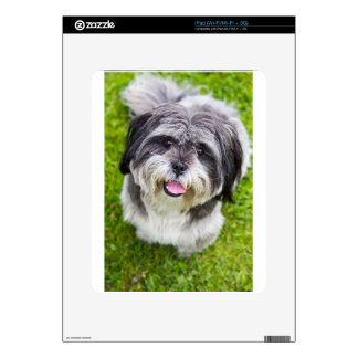 Young dog looking up decal for iPad