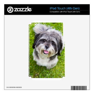 Young dog looking up iPod touch 4G decal