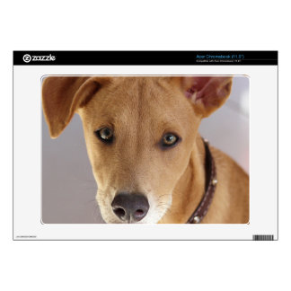 Young Dog Skins For Acer Chromebook
