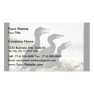 Young Double-crested Cormorants Business Card Template