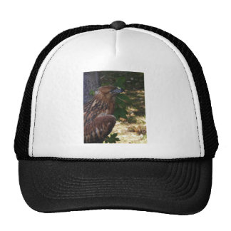 Young Eagle Mesh Hat
