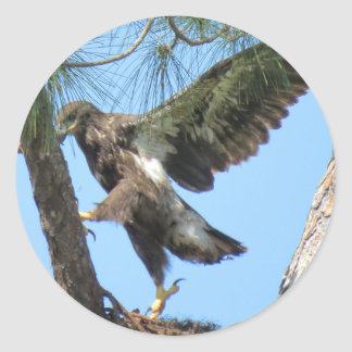 Young Eagle yoga stretch Stickers