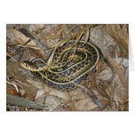 Young Eastern Garter Snake Coordinating Items Greeting Card