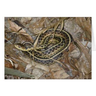 Young Eastern Garter Snake Coordinating Items Cards