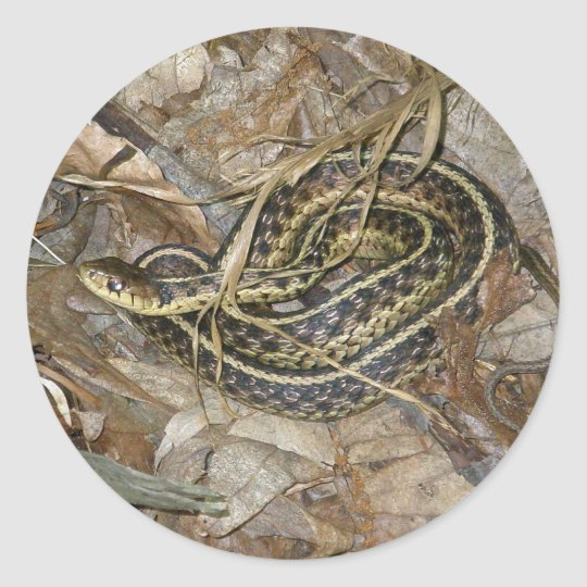 Young Eastern Garter Snake Coordinating Items Classic Round Sticker