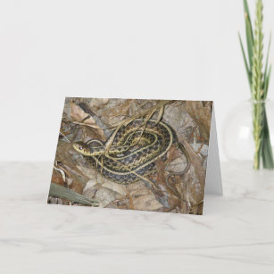 Young Eastern Garter Snake Coordinating Items Holiday Card