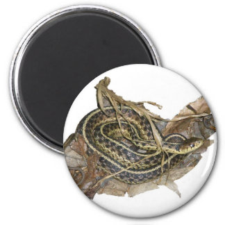 Young Eastern Garter Snake Coordinating Items Magnet