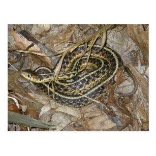 Young Eastern Garter Snake Coordinating Items Postcard