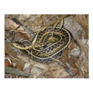 Young Eastern Garter Snake Coordinating Items Postcard