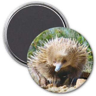 Young Echidna - Magnet