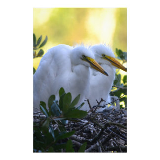 Young Egret Chicks Stationery