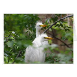 Young Egrets 271 Card
