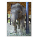 Young Elephant Greeting Cards