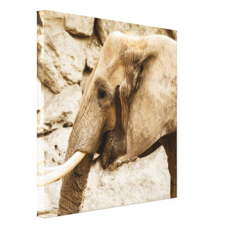 Young Elephant - Wrapped Canvas