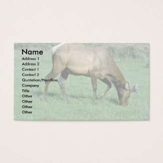 Young Elk Business Card