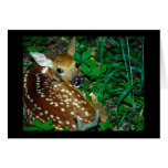 Young Fawn Greeting Card