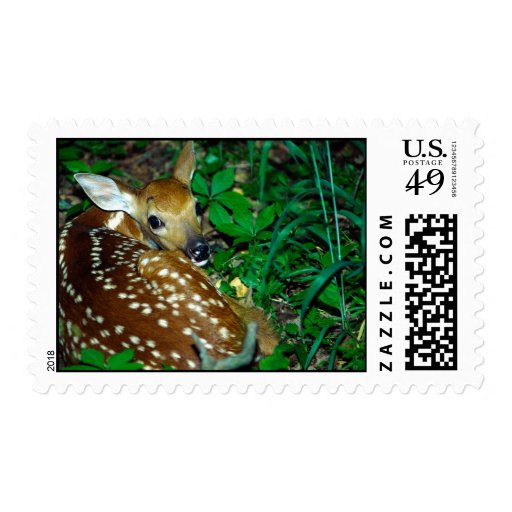 Young Fawn Postage Stamp