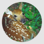 Young Fawn Stickers
