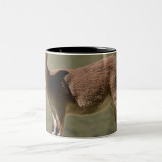 Young female wild goat, Iberian ibex, Spain Two-Tone Coffee Mug