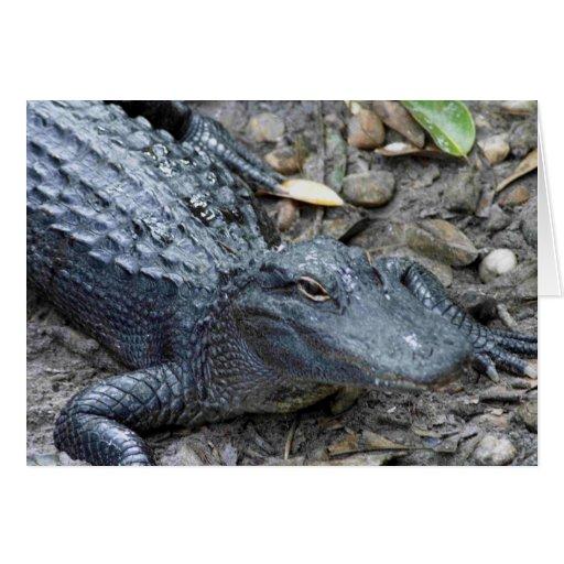 Young Florida Alligator Card