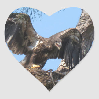Young Florida Bald Eagle Stickers