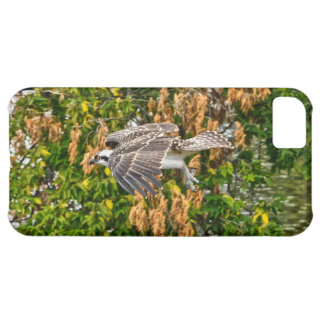 Young Flying Osprey Fish-Eagle Wildlife Photo Case For iPhone 5C