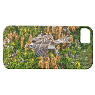 Young Flying Osprey Fish-Eagle Wildlife Photo iPhone SE/5/5s Case
