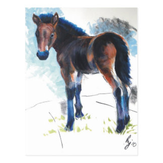 Young Foal Dartmoor Horse Painting Postcard