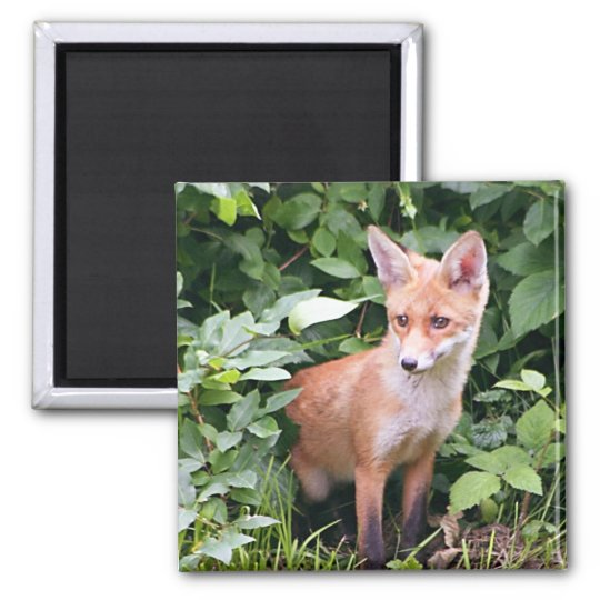 Young Fox 1 Magnet